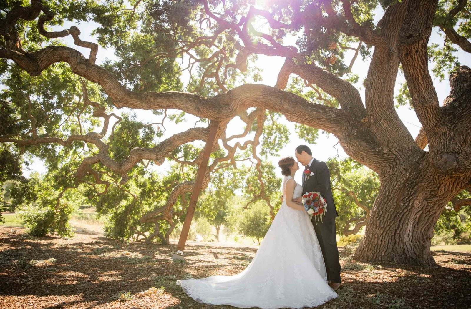 bride and groom under big tree at ruby hill winery